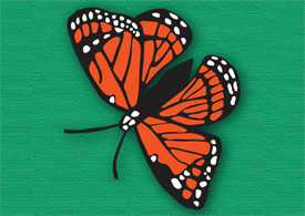 Butterfly vector illustration - free download