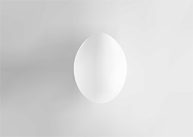 Egg Vector Illustration