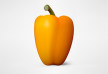 Yellow Pepper Vector Illustration