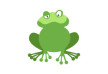 Flat Frog Vector Illustration