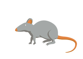 Free Vector Mouse Illustration