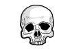 Human Skull Vector Drawing