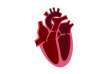 heart-cross-section-flat-vector-thumb
