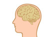 human-head-with-brain-flat-vector-thumb