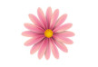 pink-flower-vector-illustration-thumb