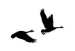 pair-of-flying-geese-silhouette-thumb