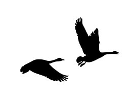 Pair Of Flying Geese Silhouette