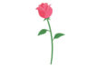 flat-rose-vector-illustration-thumb