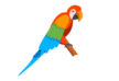 cartoon-parrot-vector-thumb