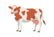cow-vector-illustration-thumb