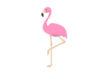 pink-flamingo-vector-illustration-thumb