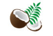 vector-coconut-pieces-with-palm-leaves-thumb