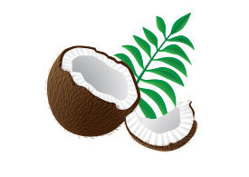 Vector Coconut Pieces With Palm Leaves