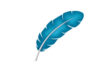 feather-vector-illustration-thumb