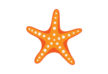 starfish-vector-thumb