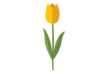 yellow-tulip-flower-flat-vector-thumb