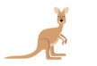 kangaroo-vector-illustration-thumb